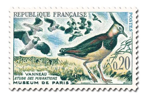 Oiseaux  (Vanneaux)