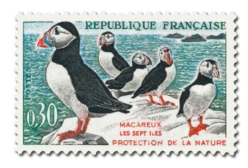 Oiseaux (Macareux-moines)