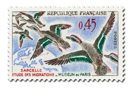 Oiseaux (Sarcelles)