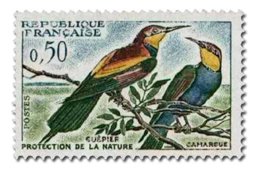 Oiseaux (Guêpiers)
