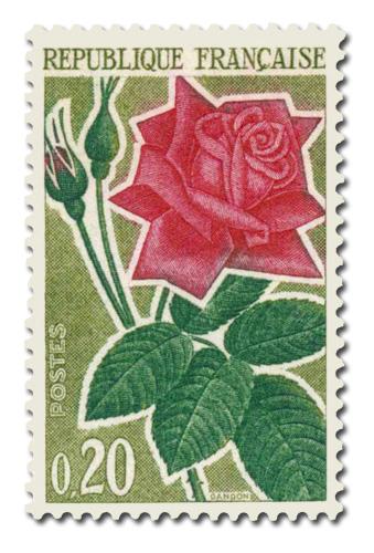 Série des Roses   -  Rose Moderne -