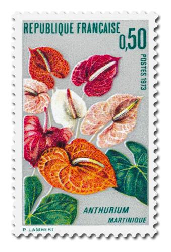 Anthurium de la Martinique