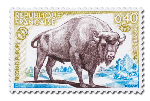 Bison d'Europe - Protection de la nature.