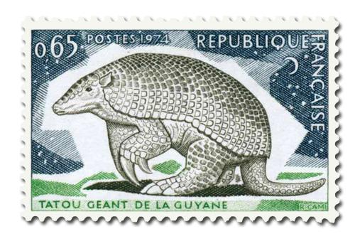 Tatou géant de la Guyane